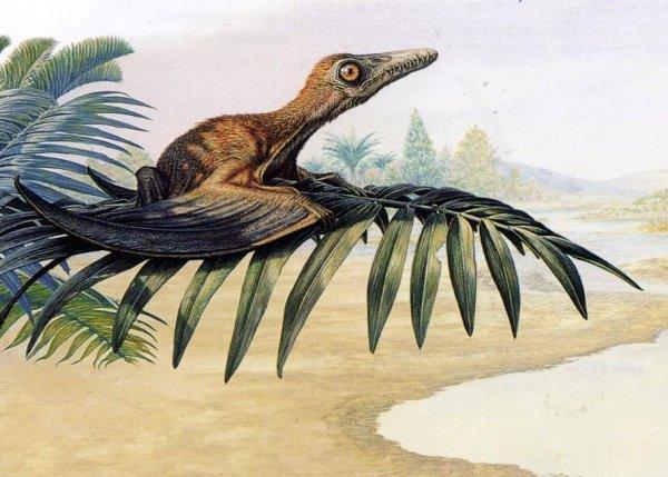 Ученые рассказали о птицах, переживших падение астероида