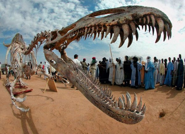 Бразильские ученые открыли новый вид динозавров
