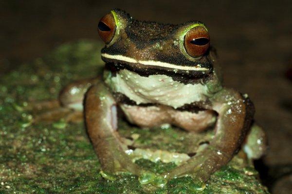 Ученые нашли лягушку с глазами на попе