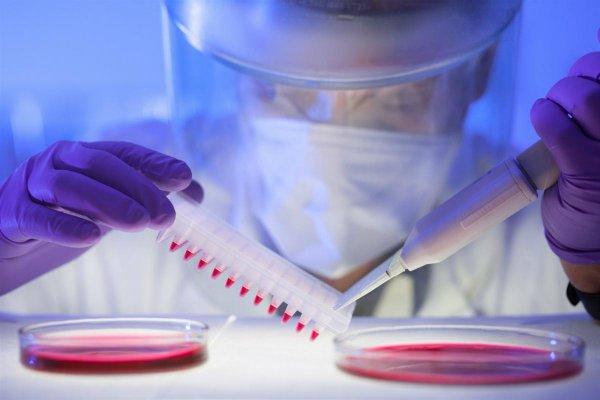 Ученые создали улучшенную модель для изучения вируса Зика