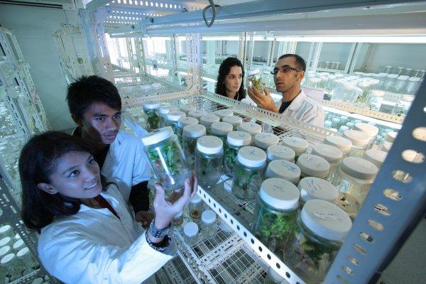 Ученые начнут лечить рак мышьяком