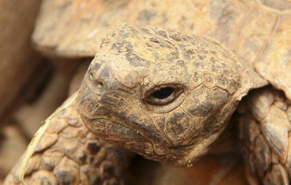 В Поволжье обнаружены останки гигантской черепахи мезозойского периода