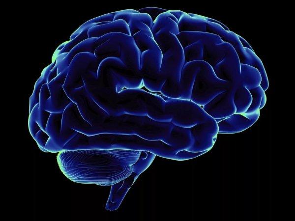 Учёные научились выращивать мозг