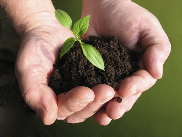 Учёные рассказали о пользе микробов для почвы