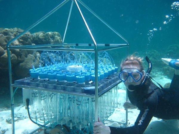 Ученым удалось поднять со дна океана неизведанные виды рыб