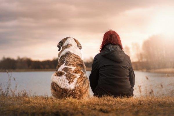 Ученые: Общение с собаками навсегда меняет организм человека