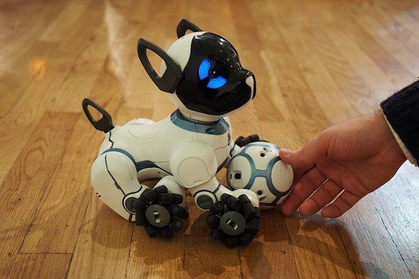 В Китае создали бьющего своего хозяина робота-пса