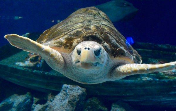 Биологи: Опухоли морских черепах похожи на человеческий рак