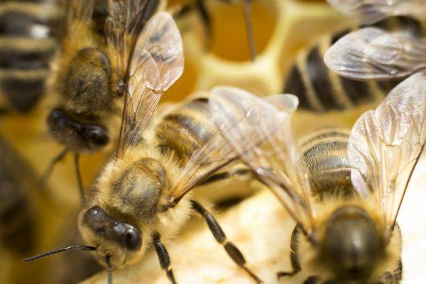 Учёные рассказали, что пчелам знакомо понятие нуля