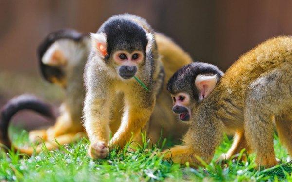 Ученые: Генетически модифицированные обезьяны помогут изучить мозг человека