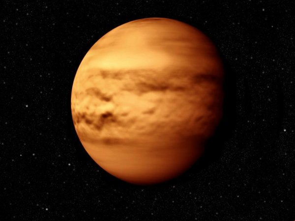Ученые обнаружили на Земле создания родом с Венеры