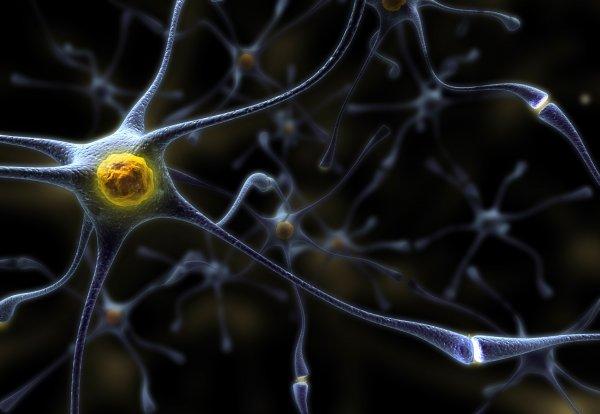 Учёные нашли способ лечения рассеянного склероза