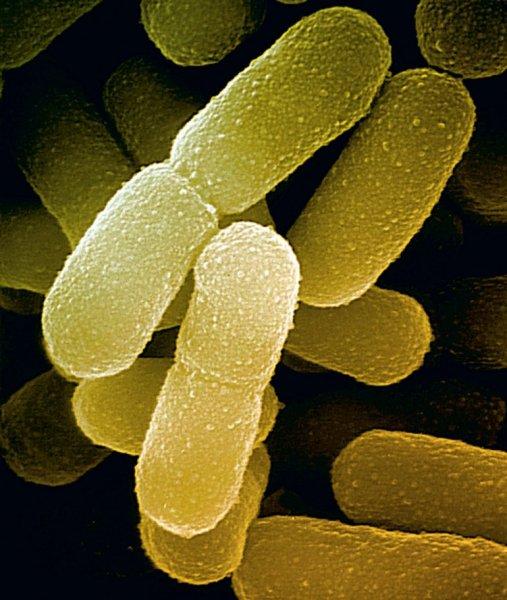 Найденная учеными бактерия способна выжить на Марсе