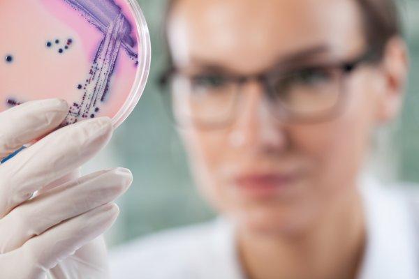 Ученые с помощью криоэлектронной микроскопии смоделировали строение геминивируса