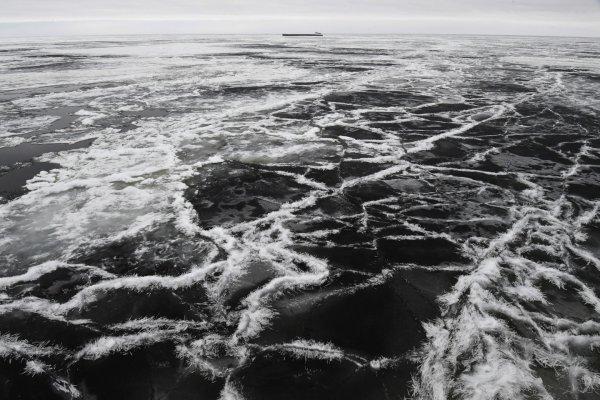 Ученые выяснили, отчего возле Сахалина массово погибла сельдь