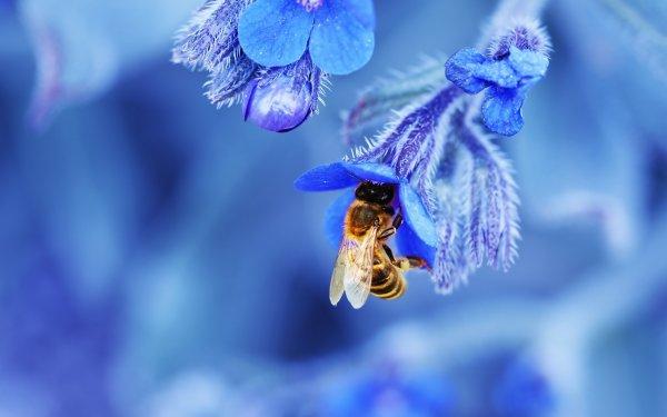 Дикие пчелы и шмели предпочитают для опыления синие цветы