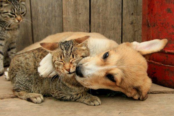 Ученые: Коты тупее, чем собаки