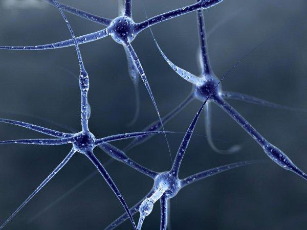 Ученые нашли способ перепрограммирования мозга