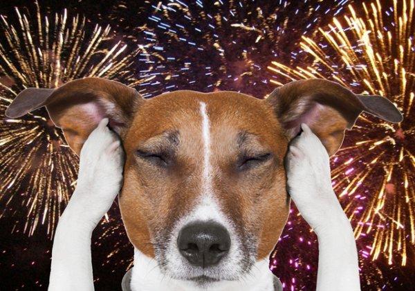 Инженеры из Ford разработали шумоподавляющую новогоднюю конуру для собак