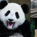 Panda снова в деле: Хакеры заразили вирусом сайт МКЖД
